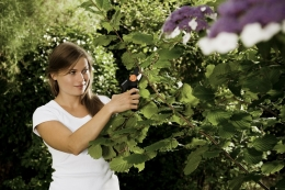 Секаторы и ножницы садовые